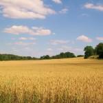 agriculture-raisonnee1