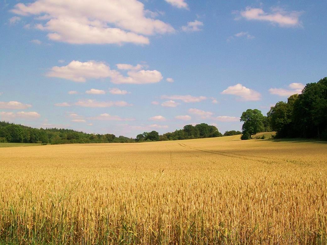 Bioeconomy and Smart Food